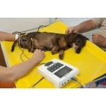Apparecchi per elettroterapia veterinaria